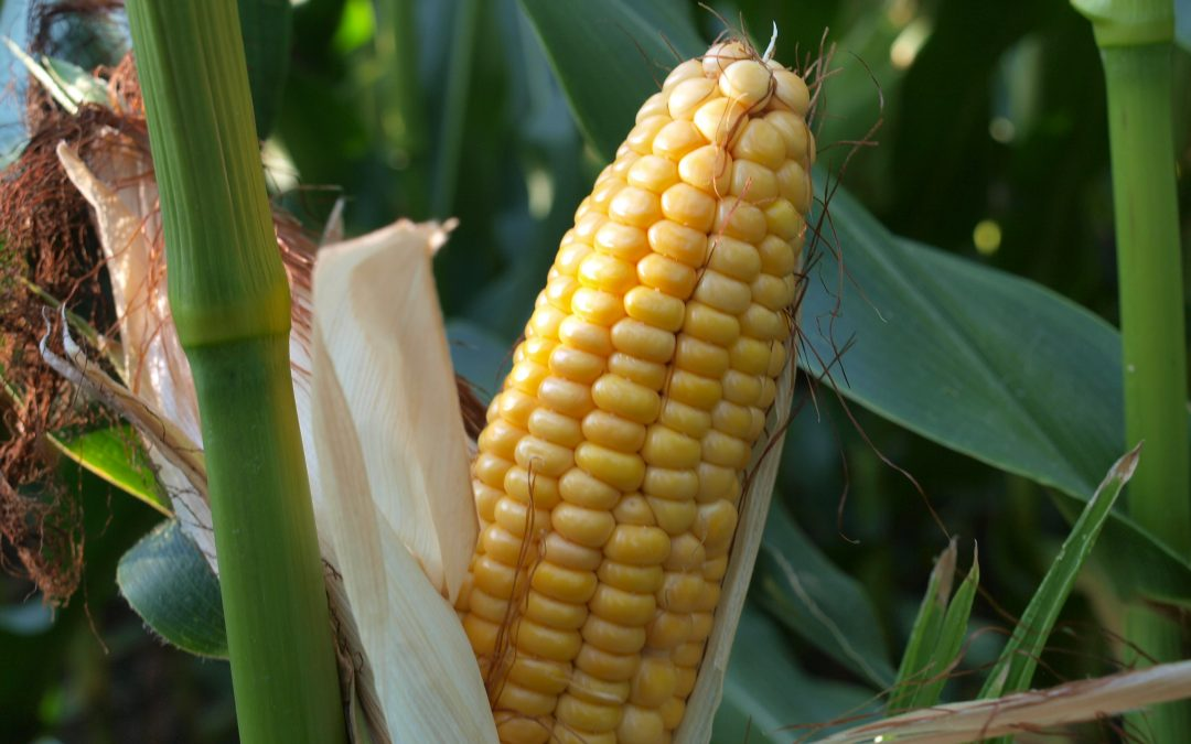 A NEW BLOG FROM BRIGHT MAIZE