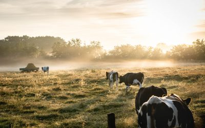 THREE KEY TRENDS THAT WILL SHAPE THE DAIRY INDUSTRY