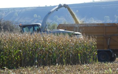 MAIZE HARVEST 2019 OVERVIEW