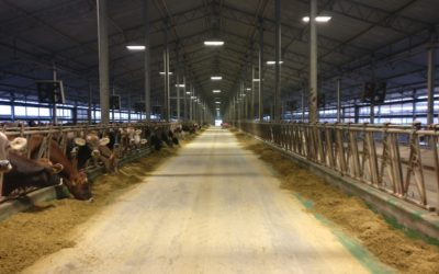 A WINDOW INTO THE UKRANIAN DAIRY SECTOR