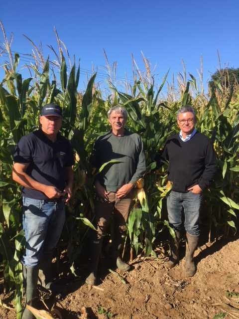 MAS SEEDS – HOW A FRENCH AGRI-COOPERATIVE DEVELOPED SOME OF THE MOST ADVANCED MAIZE VARIETIES